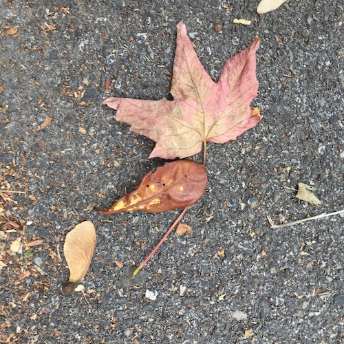 automne3_500.jpg